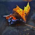 Ponurý podzim
