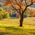 Podzim v plamenech