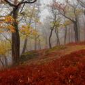 Mlha v lesích