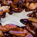 Podzim na zemi
