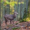 letošní podzim v přírodě (11)