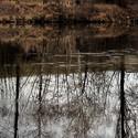 podzim u vody