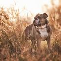 Hugo v ranním podzimním světle