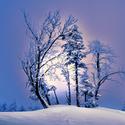 Zimní království B.