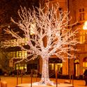 Fajný strom byl umístěn, jak se u nás v Ostravě říká, na Kuřím rynku