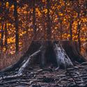 Ten den, kdy lesy hořely