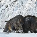 letošní zima v přírodě (1)