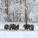 letošní zima v přírodě (8)