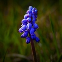 Jaro v modrém