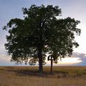 ... o strome a kríži II ...