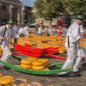 Trh se sýry Gouda v Alkmaaru