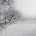 Zimní mlhovka