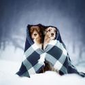 Klasická zima