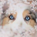 Modré oči