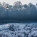 Jarní ráno v lese