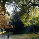 Procházka v podzimním ránu