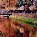Podzim úžasný malíř II