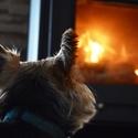 Ne každé zvíře se ohně bojí