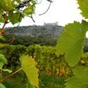 Pálavské vinice