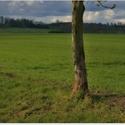 jeden strom v poli