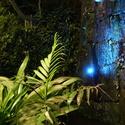 Modrá džungle