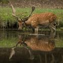 Zrcadlo přírody