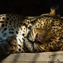 Ležící spící