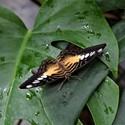 Odpočinek motýla 2
