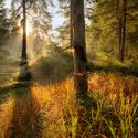 V Hrabětickém lese