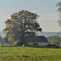 Ráno na farmě