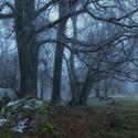Stromy v mlze.