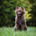 Maloj - štěně Německého špice