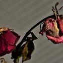Růžové zátiší