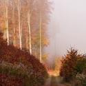Mlhavé podzimní ráno ...
