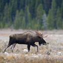 obrázky z přírody Severní Ameriky (2)