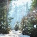 Cesta sněhem II