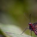 Motýl z FM