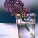 Kvetoucí světlo