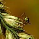 Život na stéble trávy