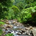 Džunglí