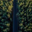 Cesta uprostřed lesa