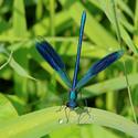 Motýlicová...