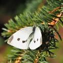 Jak spí motýli