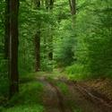 Letní lesní odpoledne.