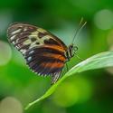Motýl z Motýlího domu v Jonsdorfu