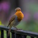 Barevný ptáček