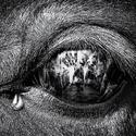 Co oči nevidí...