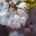 Jarní květy v podzimním čase