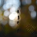 Pavoučí hrátky