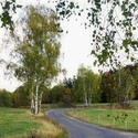 Cesty podzimem